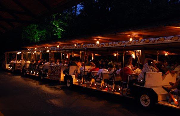 Singapore-Night-Safari1
