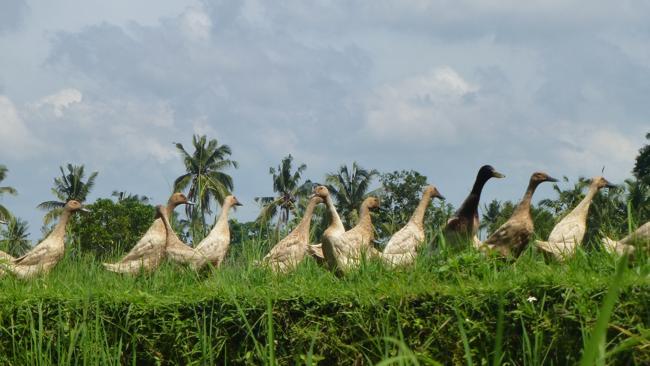 Watch Bali Birds