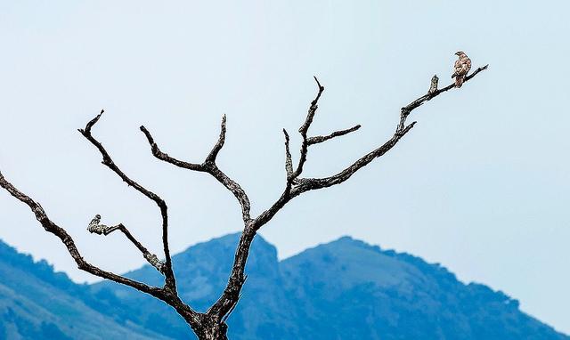blue Nilgiri Mountains