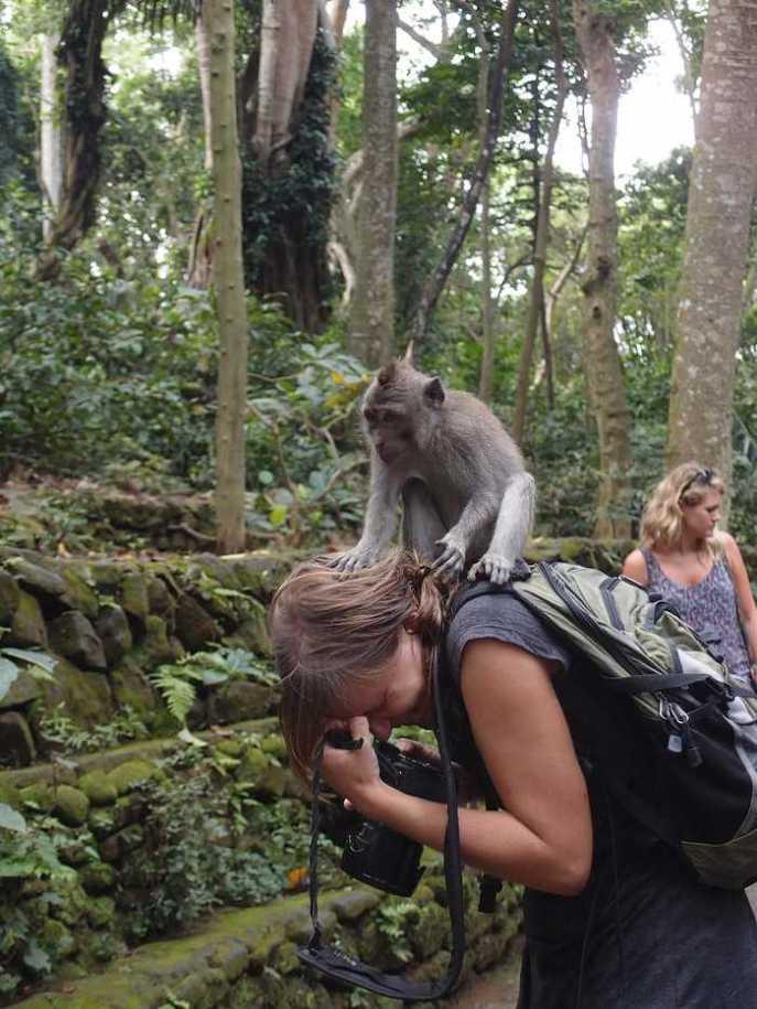 Monkey-Forest-Bali
