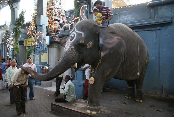 Pondicherry-Manakula-Vinayagar-Temple-elephant
