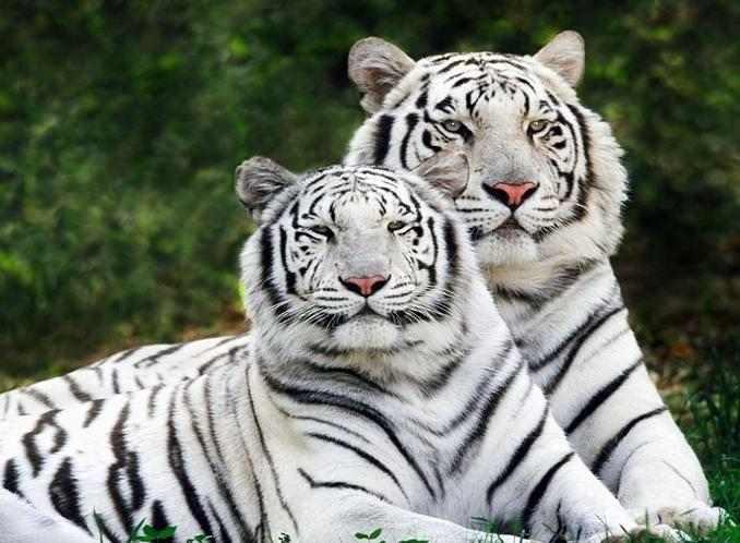 The Rajiv Gandhi Zoological Park2